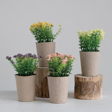 Blooming Plant in Paper Pot