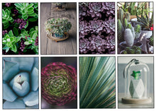 Succulent Weekly Kit-Photography