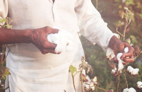 Whilst much of the world's cotton is machine harvested, especially in the USA, Egypt has remained firmly devoted to delicate hand-picking. Photo and quote credit: Cotton Egypt Association