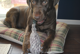 Crinkle Duck Water Bottle Dog Toy