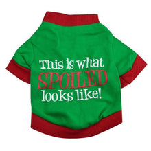 This is What Spoiled Looks Like Cat Costume Shirt in Christmas Colors