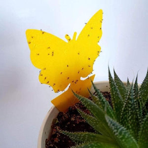 Traps Insect/Fly Sticky Trap [20 PCS] Butterfly shape [Pack of 20 PCS] - DiyosWorld