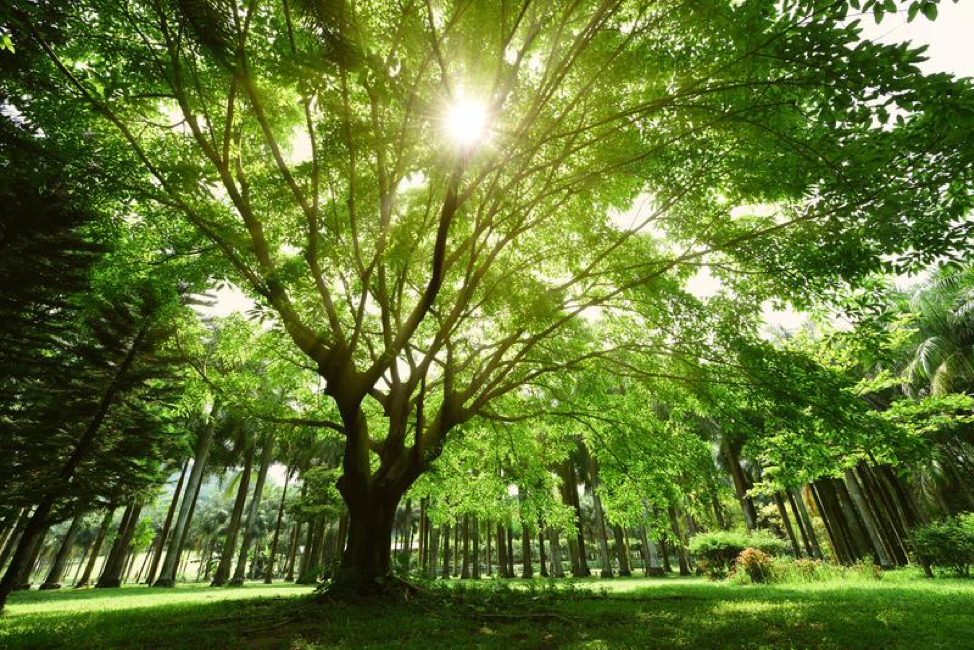 4 Ways All Businesses Depend on Trees