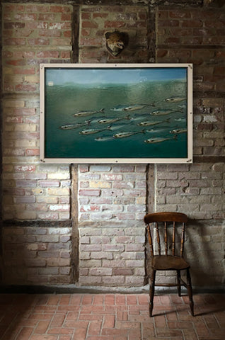 Mackerel Shoal 2d Display