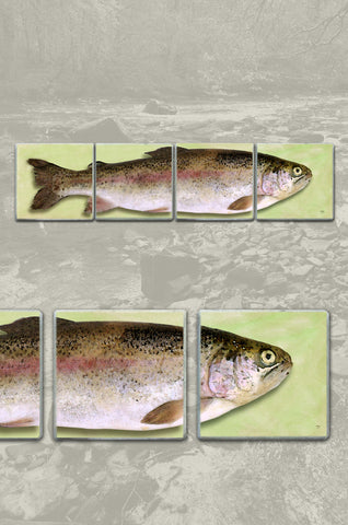 Split Trout Coaster Set