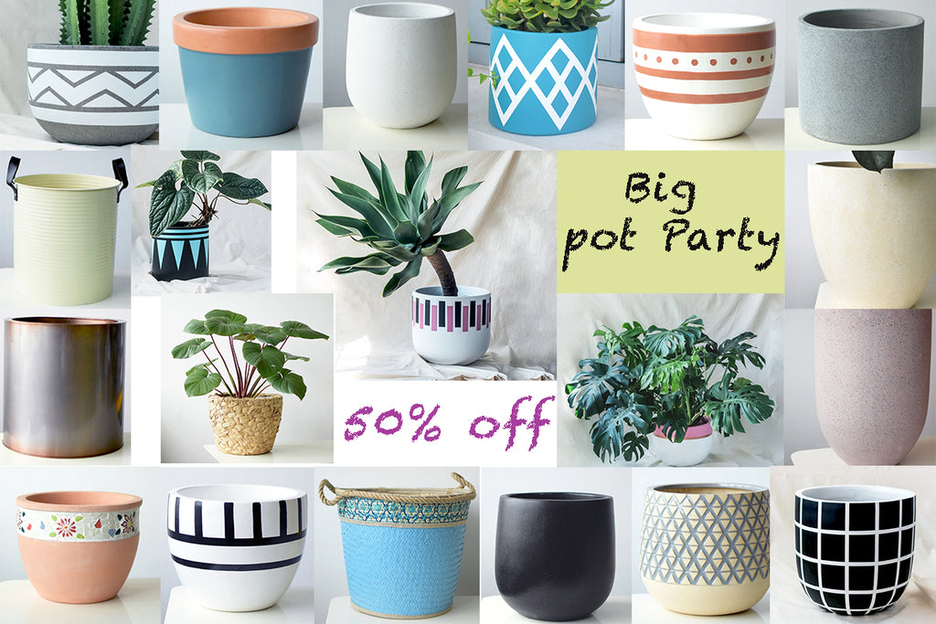 TUMBLEWEED'S BIG POT PARTY!