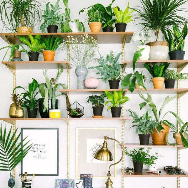 HOUSEPLANT CARE WORKSHOP - 16 JUNE