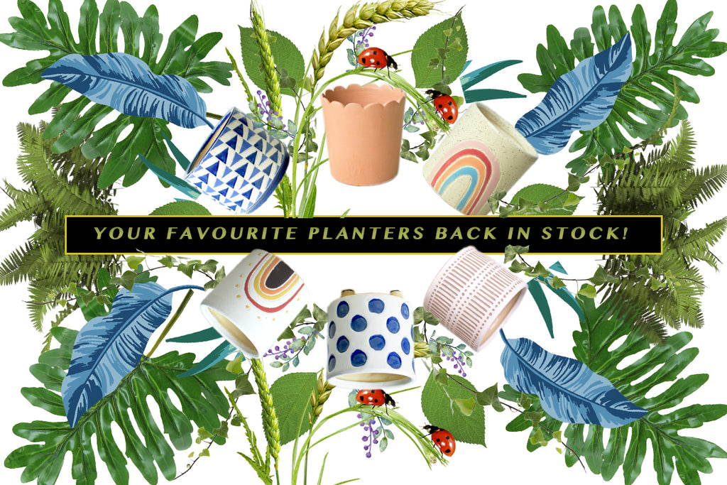 YOUR FAVOURITE PLANTERS BACK IN STOCK!