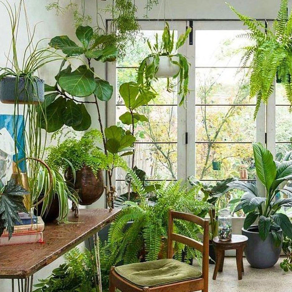 GROW YOUR HOUSEPLANT KNOWLEDGE