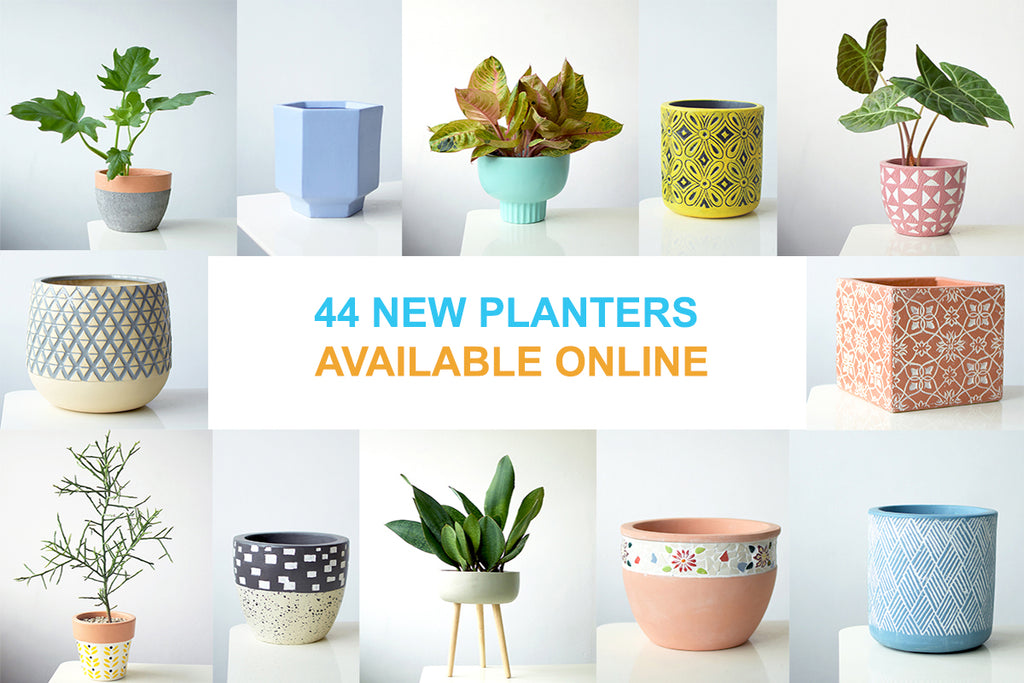 44 NEW PLANTERS AVAILABLE ONLINE!