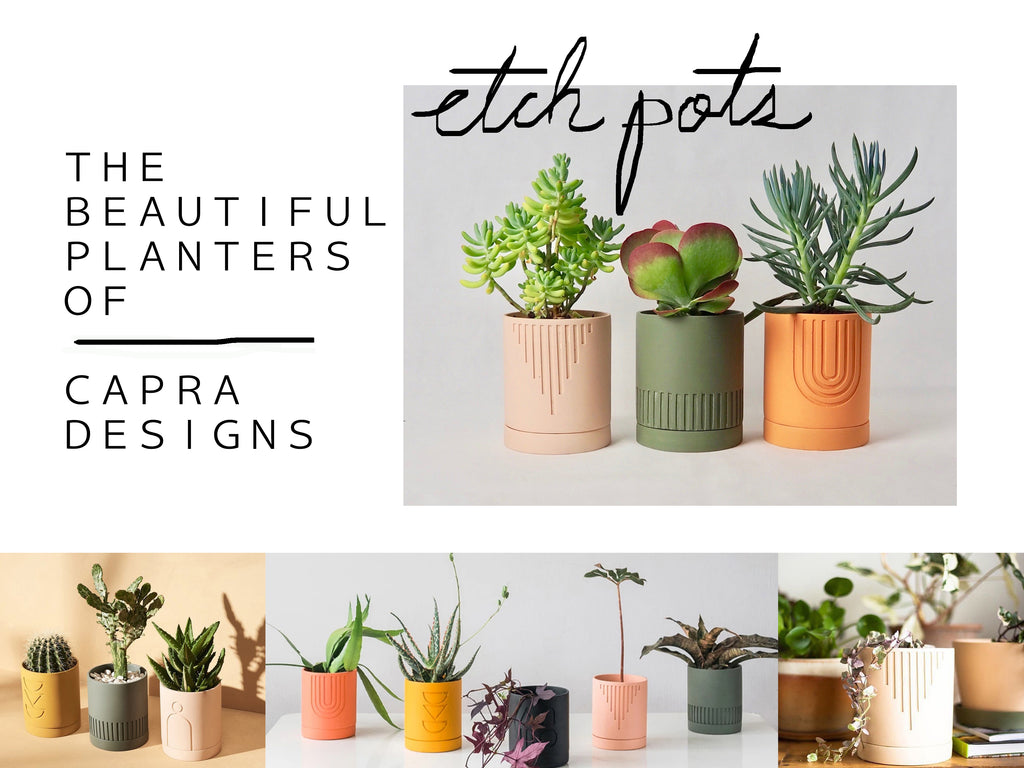 THE BEAUTIFUL PLANTERS OF CAPRA DESIGNS