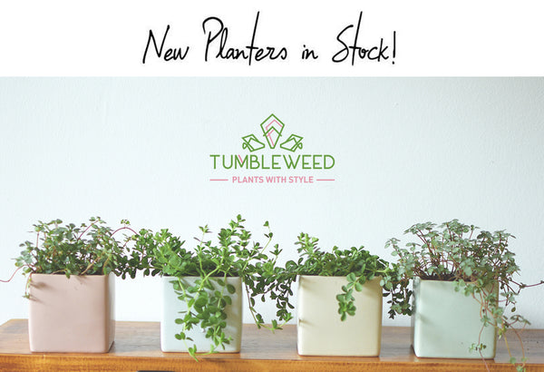 New planters in stock!