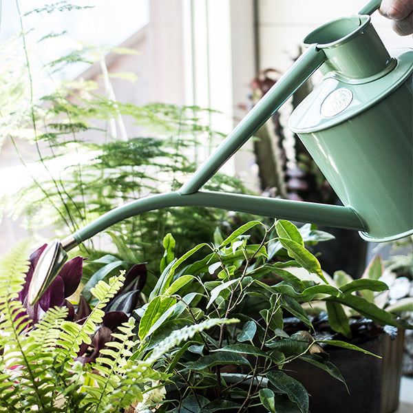 NEW HOUSEPLANT CARE WORKSHOPS - 26 AND 29 SEPTEMBER