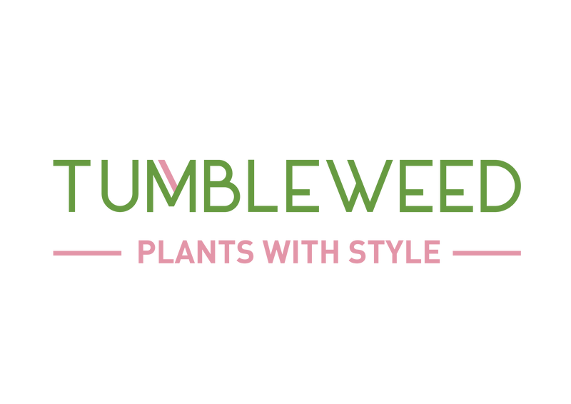 Tumbleweed Plants for indoor plants and plant design in Singapore. Cool plants, stylish planters and pots, stands, macrame hanging displays and workshops