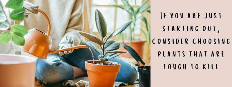 how to choose a suitable indoor plants?