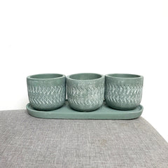green-succulent-set