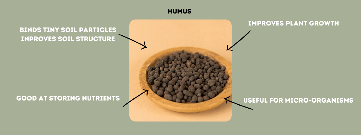 plant and soil nutrients humus
