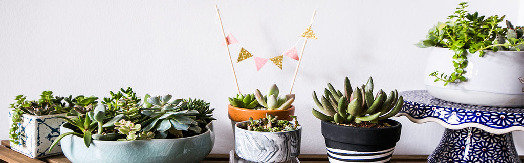 succulents, potted, arrangement, tumbleweed plants, succulents arrangement, garden, ready made, custom made, fresh, cute, showroom, indoor plants, tumbleweed plants, Singapore