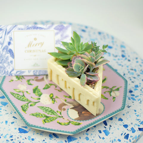 succulents slice, cake