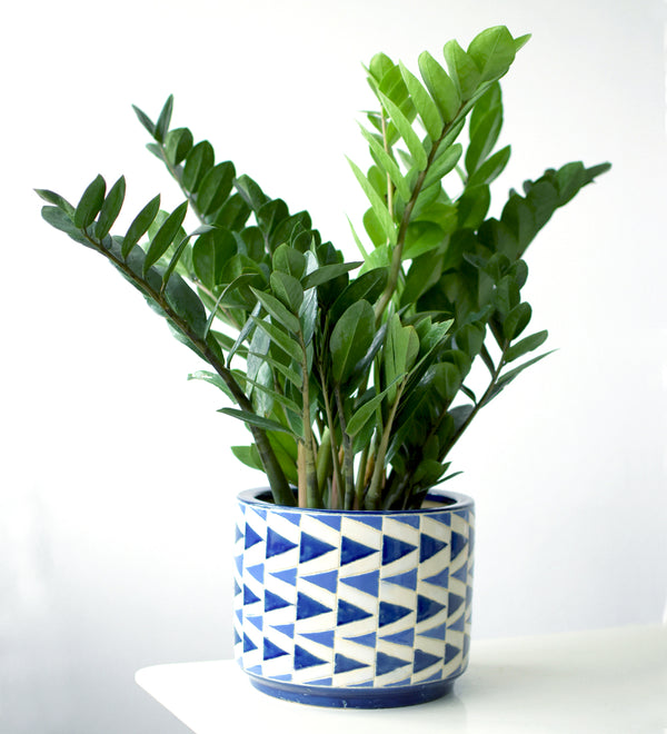 Arrow Pot