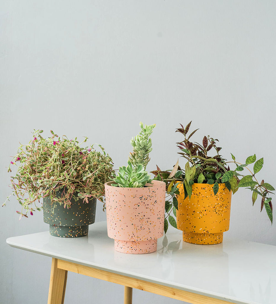 Trio of colourful Capra Designs' Banjo terrazzo planters and plants, styled by Tumbleweed Plants