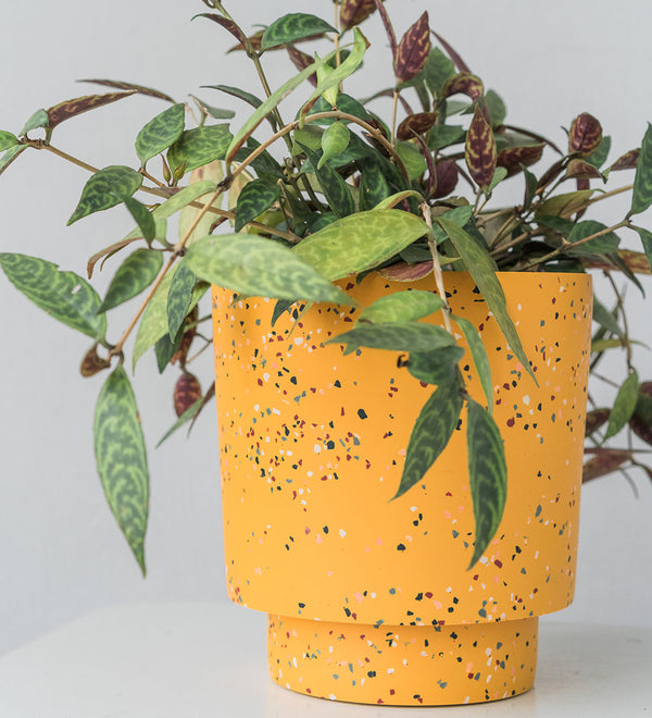 Beautiful looking houseplant in yellow Terrazzo planter