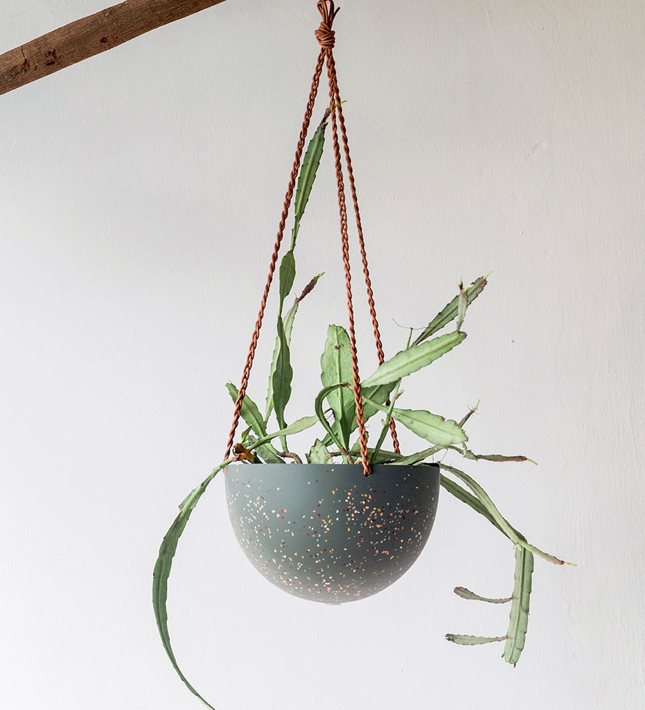 Weird shaped rhipsalis in hanging terrazzo planter