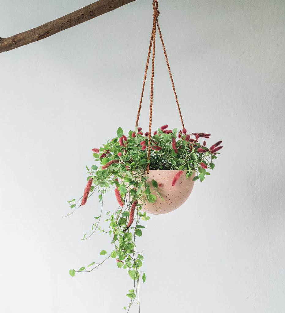 Hanging Terrazzo planter with Leather cord with plant with furry pink flowers