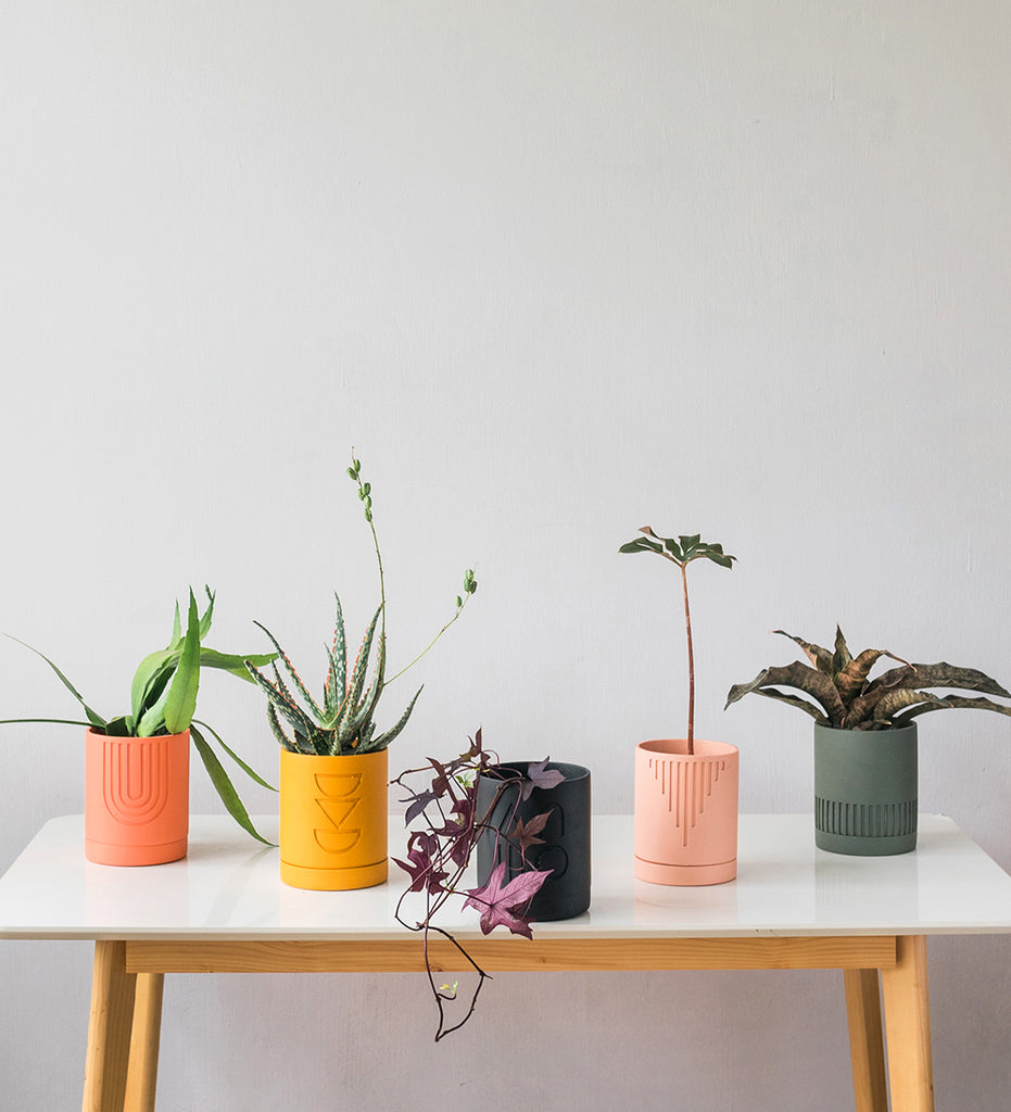 Five colourful Etch Pot planters by Capra Designs styled with houseplants by Tumbleweed Plants