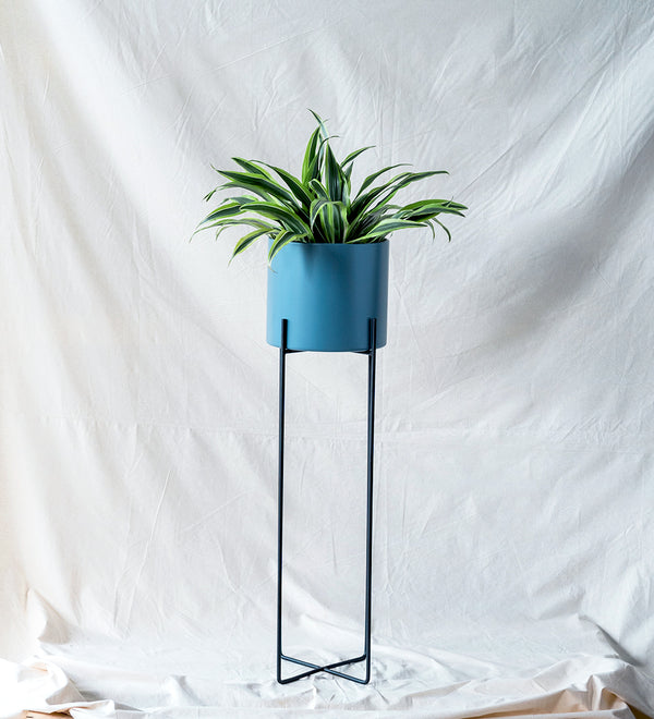 Cool office plant set up with plant in colourful blue stand