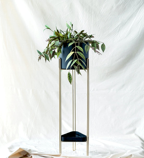 Cool looking indoor plant in stylish black stand with gold legs