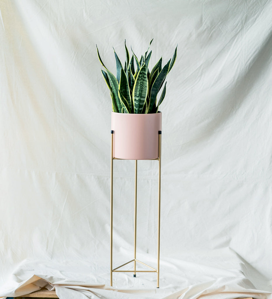 Cool office plant snake plant in pastel pink plant stand