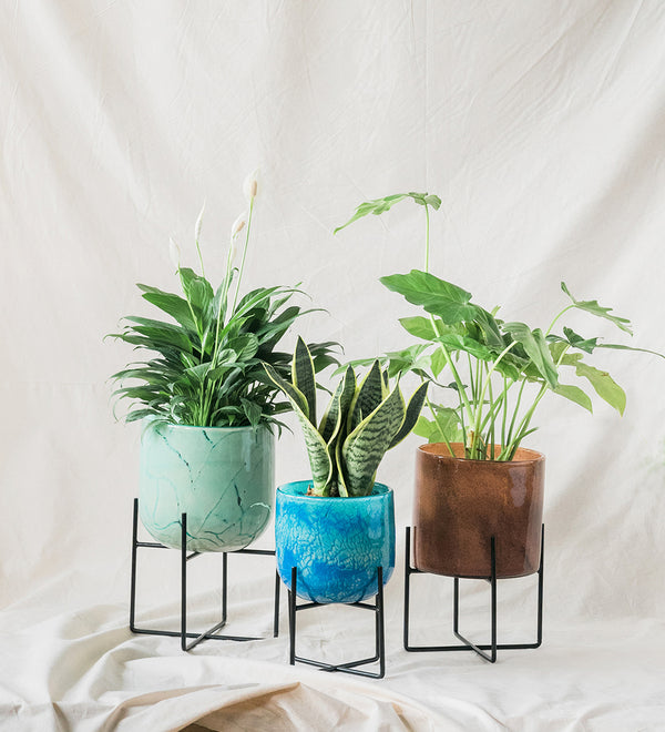 Stylish Glass Planters filled with a mix of houseplants