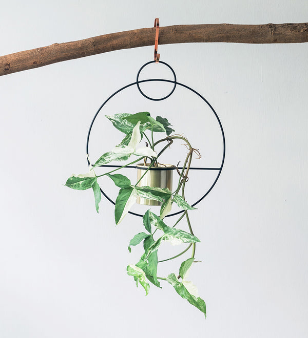 Variegated syngonium plant in hanging ring planter hanging from wooden log