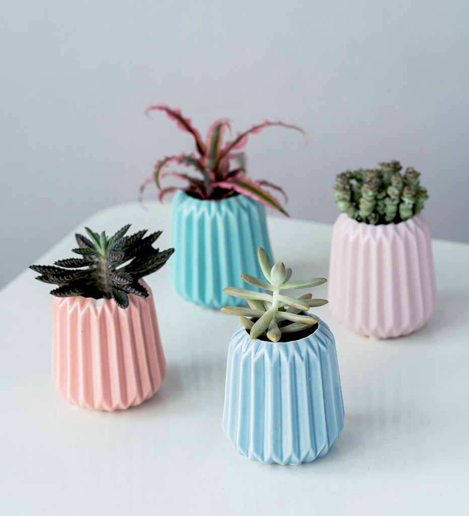 Succulent plants, cacti and cryptanthus in four colourful ceramic pots
