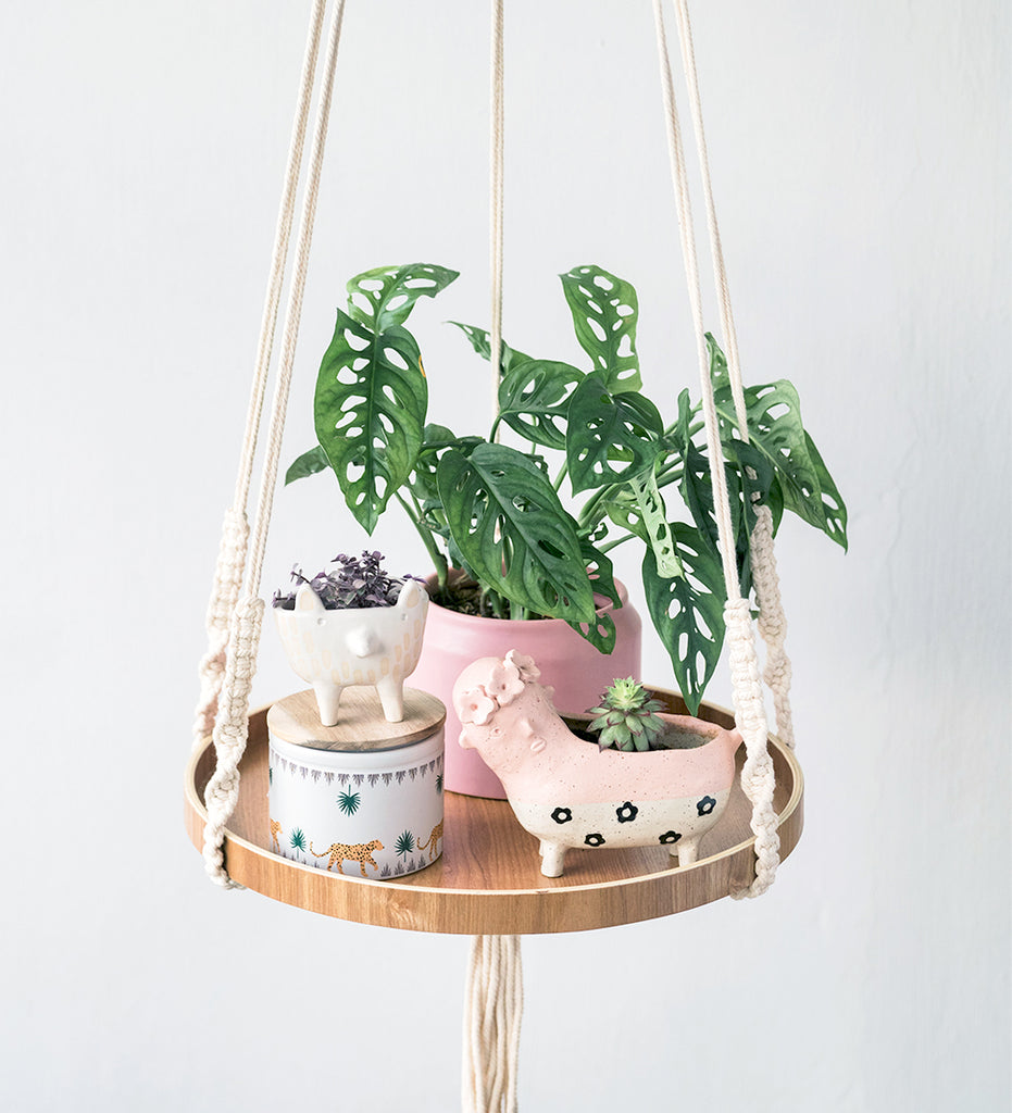 Floating shelf filled with plants