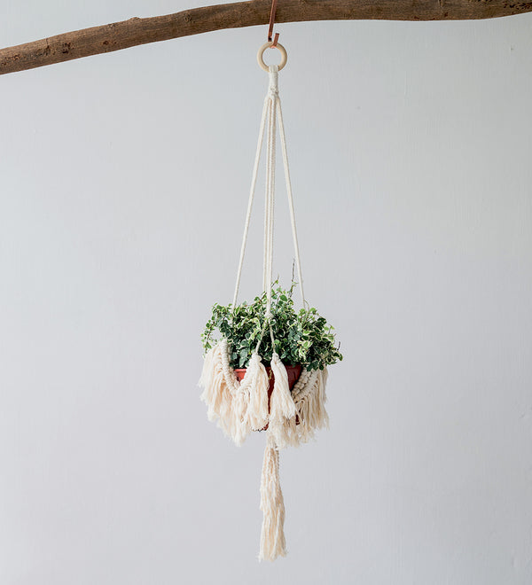 Macrame hanger with tassels hanging on wooden branch