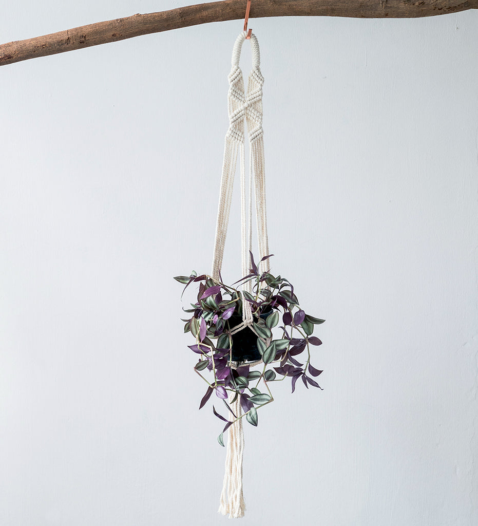 Tradescantia plant in macrame hanger hanging from wooden branch
