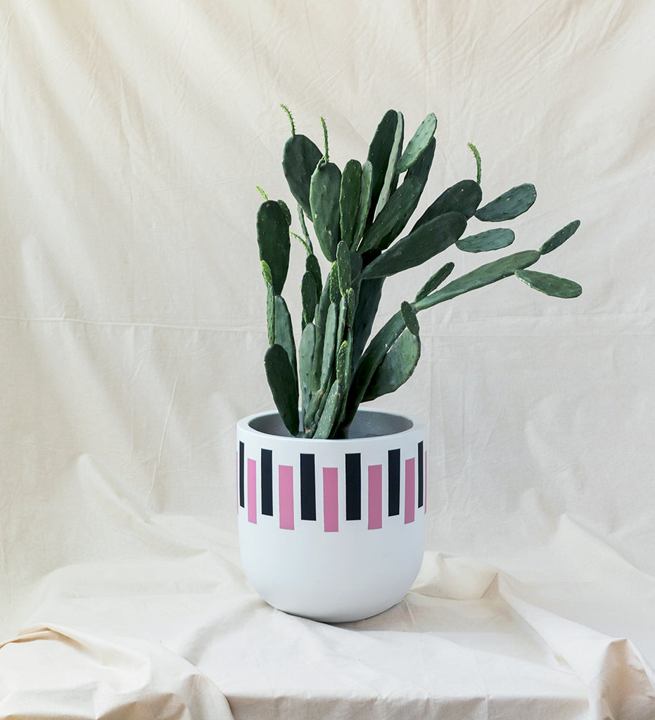 Prickly pear cactus in cool pink, black and white retro design plant pot