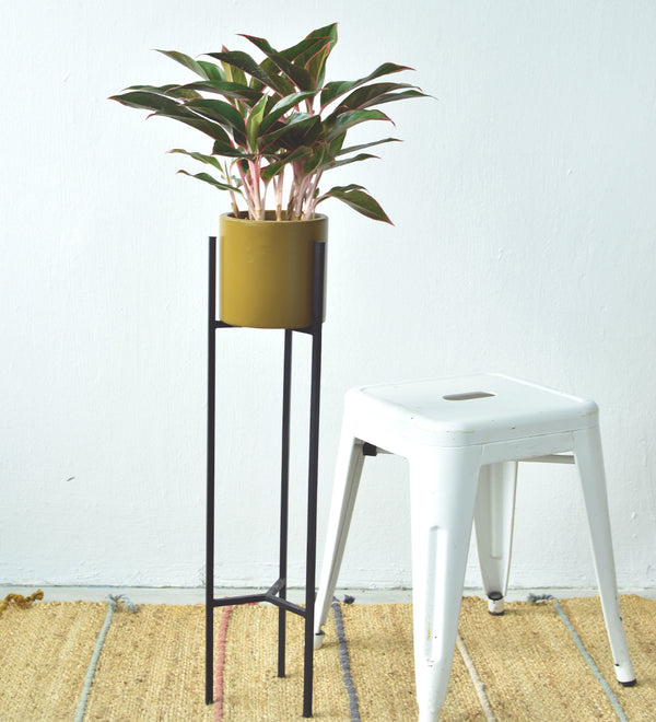 Mini Tall Plant Stands