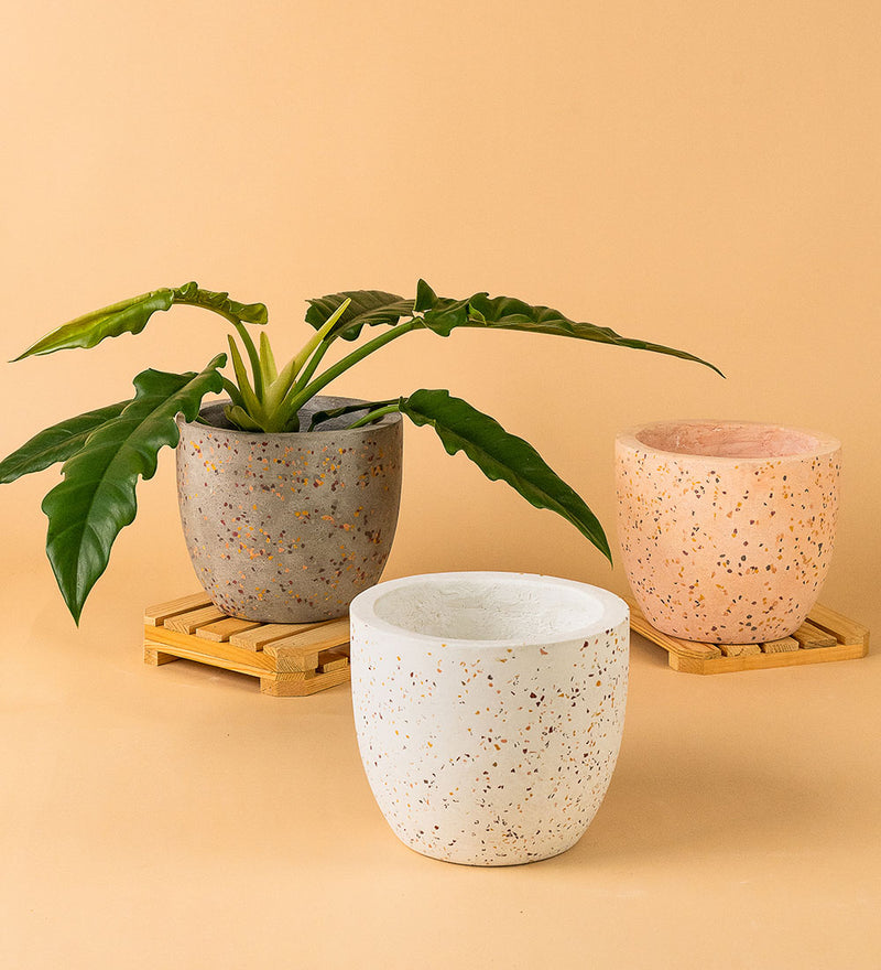 Egg Cement Pots
