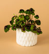 Geometric White Ceramic Pot B