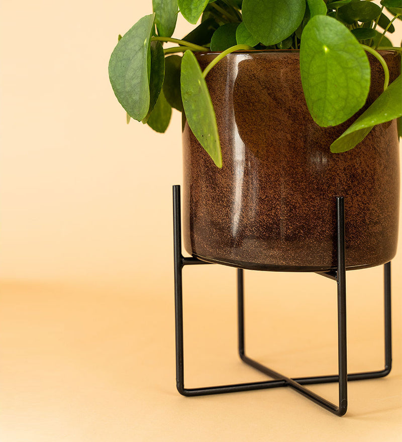Glass Plant Stand Brown