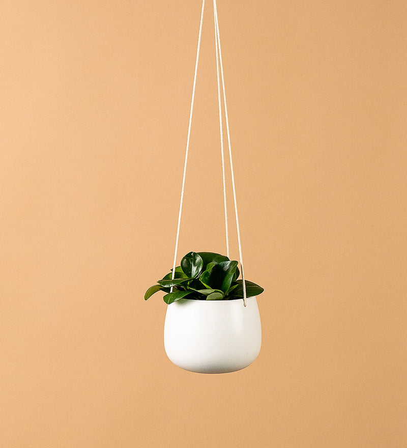 Hanging Ceramic Planter