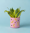 Potted Sansevieria Trifasciata Golden Hahnii In Banana Pot Pink