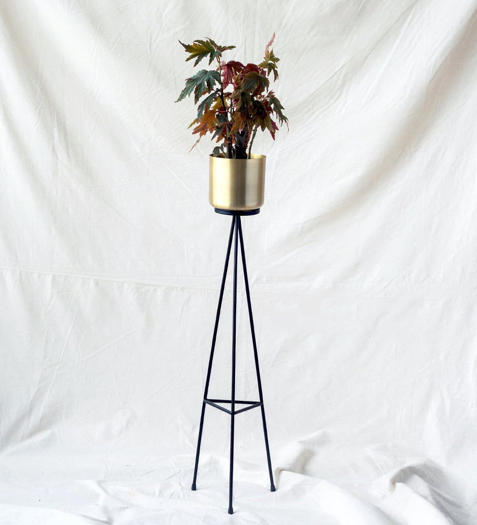 Gold plant stand with Begonia