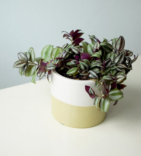 Cream Two Tone Pot