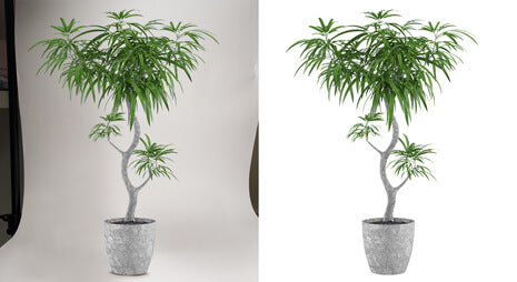 Background removal service sample by Clipping Path India