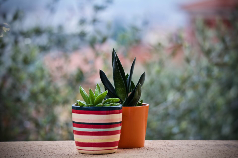 Plants bokeh product photo