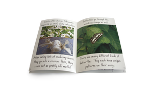 Let's Learn about Insects Big Book